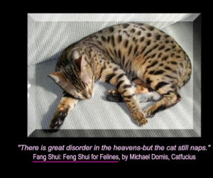 ... is Great Disorder in the heavens but the cat still naps – Cat Quote