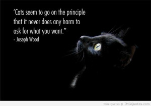 more quotes pictures under cat quotes html code for picture