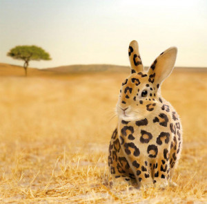 Strange Funny Rabbit or Leopard