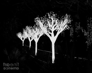Christmas Lights In Black And White By Carol Bradley Double B