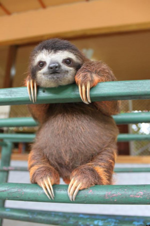 SLOTH-ON-A-RAILING-facebook.jpg