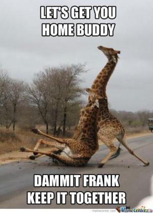 giraffe-funny_o_789942