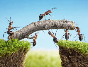 Why Team Building? – This post describes the benefits of team ...