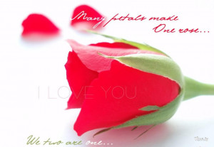 Pink Love Flower And Love Quote Hd Wallpaper