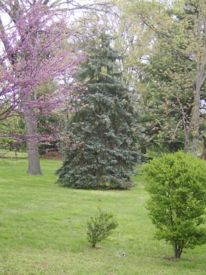 Nolensville Landscaping Landscaper Landscape Tn Tennessee Evergreen ...