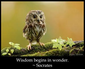23 10 wisdom quotes spiritual spirituality owl socrates wonder quote ...