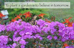 Monarch butterflies love Volcano phlox
