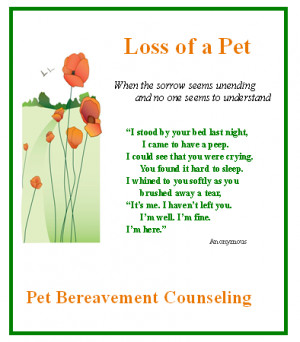 Grieving Over The Loss Pet