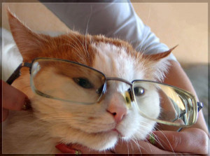 Funny Cat Wearing Reading Glasses Cats Story Mad