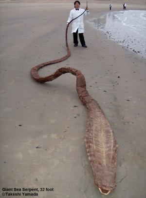 Sea Serpent Carcass or Gaff?