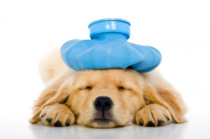 Spending A Lot of Money on Your Sick Dog or Cat: Is that Ethical?
