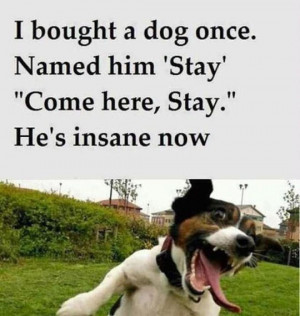 funny-picture-dog-name-pet-stay