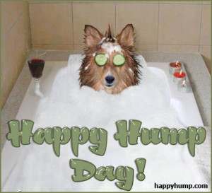 happy-humpday-0920-funny-dog