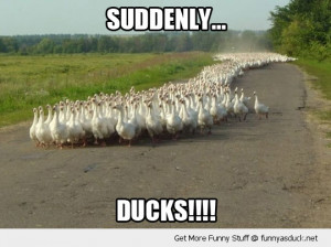 funny duck quotes quotesgram