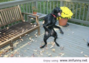 dance like a dog funny pictures funny quotes photos quotes