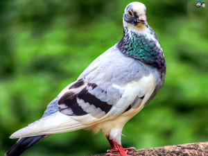 Bible Verses With Birds