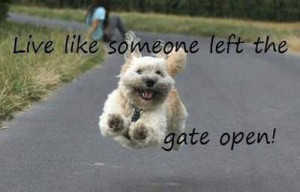 Dog quote from Charlie the Dog on Facebook