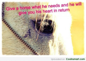 Horse Quote: Give a horse what he needs and...