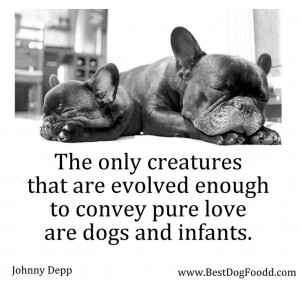 Dog Quotes Sayings And Poems