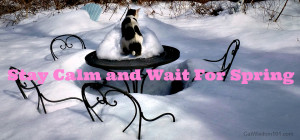 ManCat Monday: Stay Calm & Wait For Spring