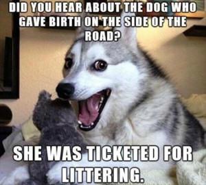 one liner dog jokes