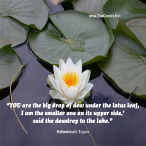 YOU are the big drop of dew under the lotus leaf,