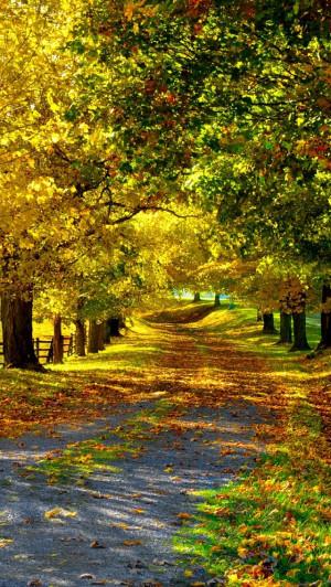 Naturaleza de otoño, las hojas amarillas, árboles, camino, valla ...