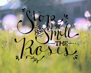 "saying I've heard, over and over again. ""Stop and smell the ..."