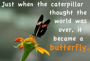 Butterfly world quotes