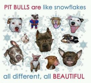Pitbull Inspirational Quotes. QuotesGram