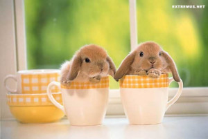 How was your weekend?! (and very cute bunnies)