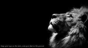 lion quote