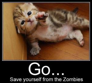 Cute & Funny Kittens (1)
