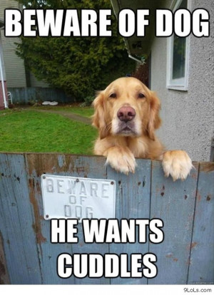 -funny-summer-2013-funny-quotes-funny-funny-memes-funny-animals-funny ...