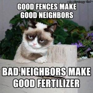 Grumpy Cat is a bad neighbor