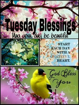 Tuesday Blessings...May your day be beautiful. ️
