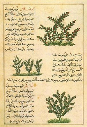 ... in an Arabic manuscript from Iraq, late 14th century. ( Source