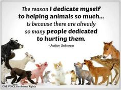Animal quotes and animals lovers' quotes