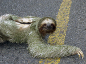 Funny Video: Potty Training Your Sloth
