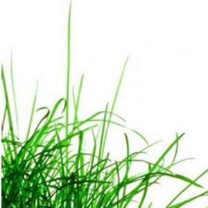 These are the quotes about life love green grass and Pictures