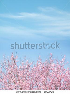 winter plum blossom tree