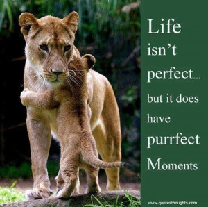 Nice life quotes thoughts perfect moments great best