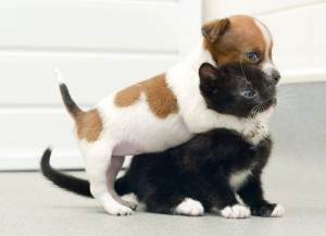 Puppy, Kitten Think They Are 'Sisters': Buttons The Jack Russell ...
