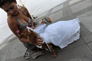 Trixie The Scottish Terrier