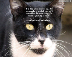 cat quotes   cats wallpapers   innocent cats quotes   nice cats quotes