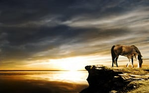Related Horse Sunset Wallpaper Cool Background HD #40614