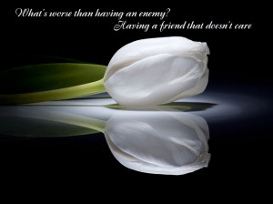 The Words With The White Lily Flower Picture Of Friendship Quotes