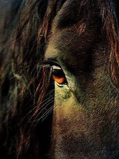 ... strength and courage. It is the window that reveals to us how willing