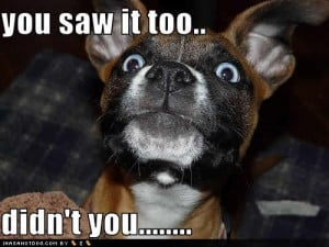 Funny Dog picture with caption You saw it too