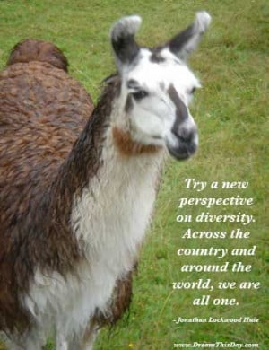 Try a new perspective on diversity .